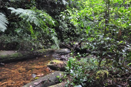 Forest of Cusuco NP