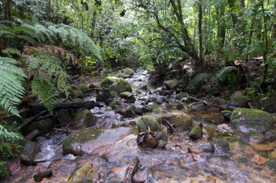 stream by Buenos Aires