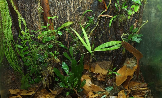 vivarium for R. biolat