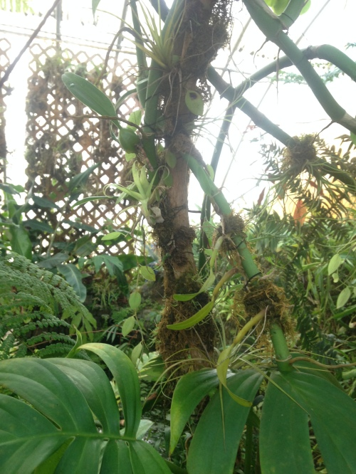 so many epiphytes...
